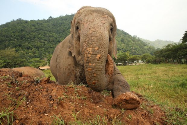 ENP Coffee: Connecting Elephants, Reforestation and Tribal Coffee of Northern Thailand