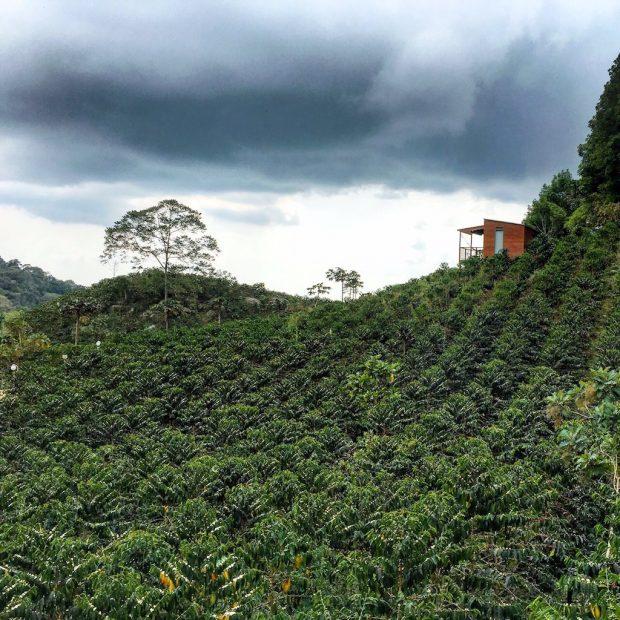 A view of the La Palma y El Tucan farm from one of the new cabins. All images courtesy of La Palma y El Tucan.