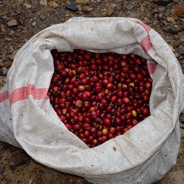 la-palma-cherries