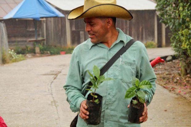 jose_coffee-plants