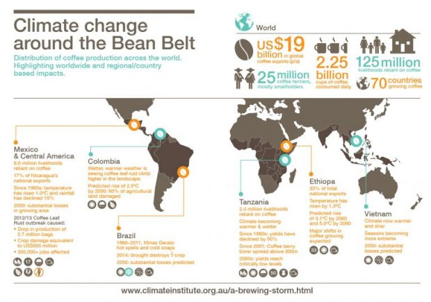 tci_infographic_bean_belt_map_standalone-01-768x539
