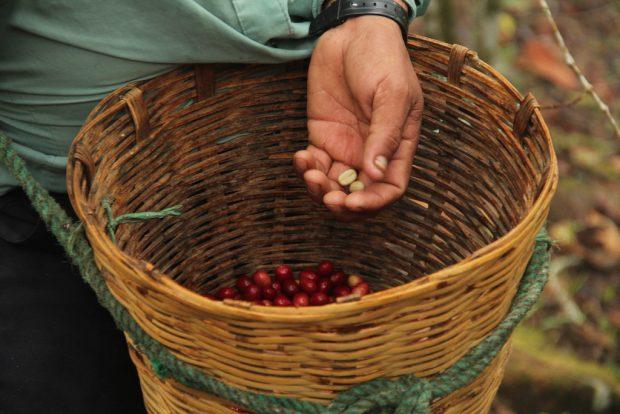 coop coffees cherries