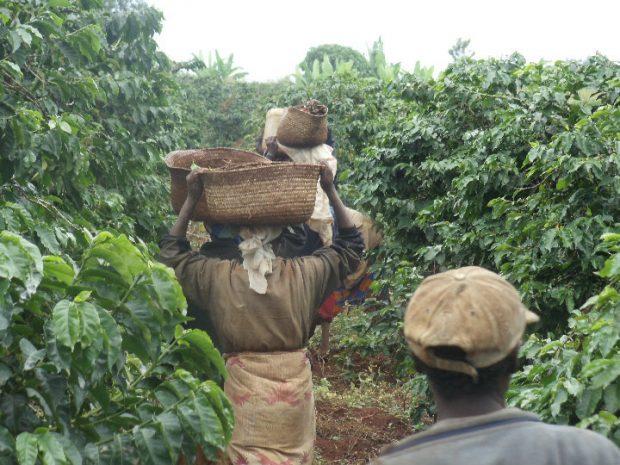 Growers Alliance Coffee Company photo.