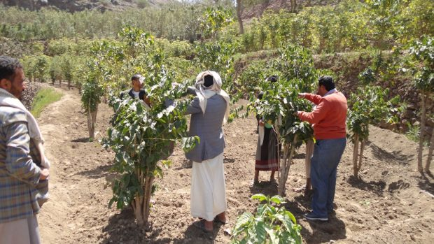 At the Roowad cooperative in Hayma, Yemen. Royal Coffee photo.