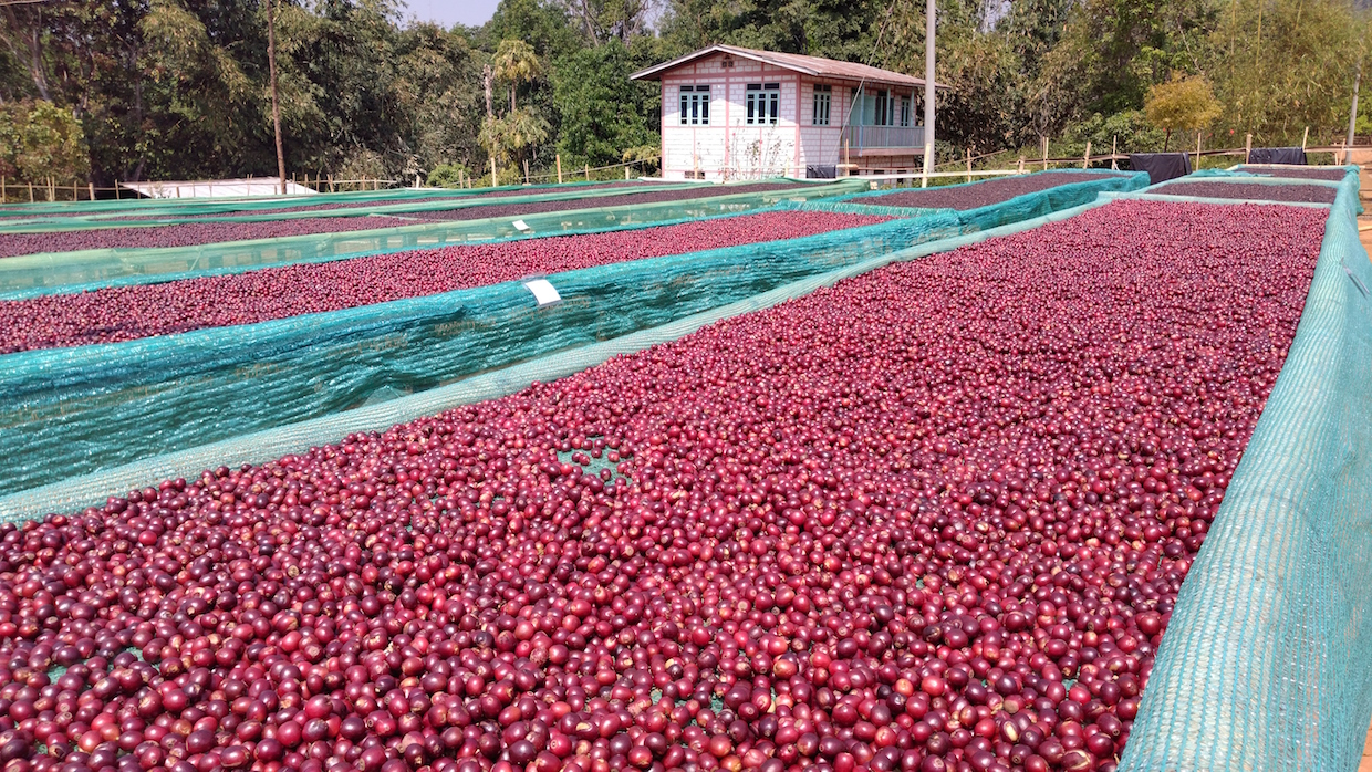 Myanmar coffee