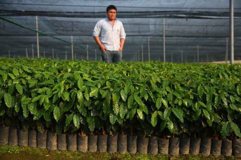 starbucks coffee plants