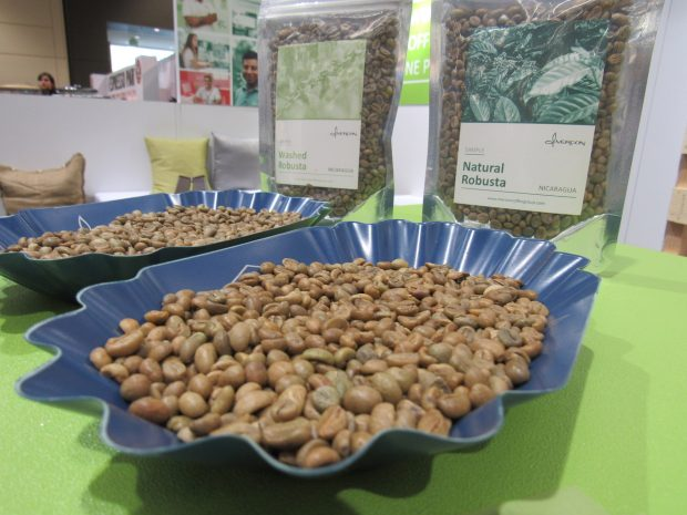 Nicaragua Specialist Mercon Launches Robusta Exports