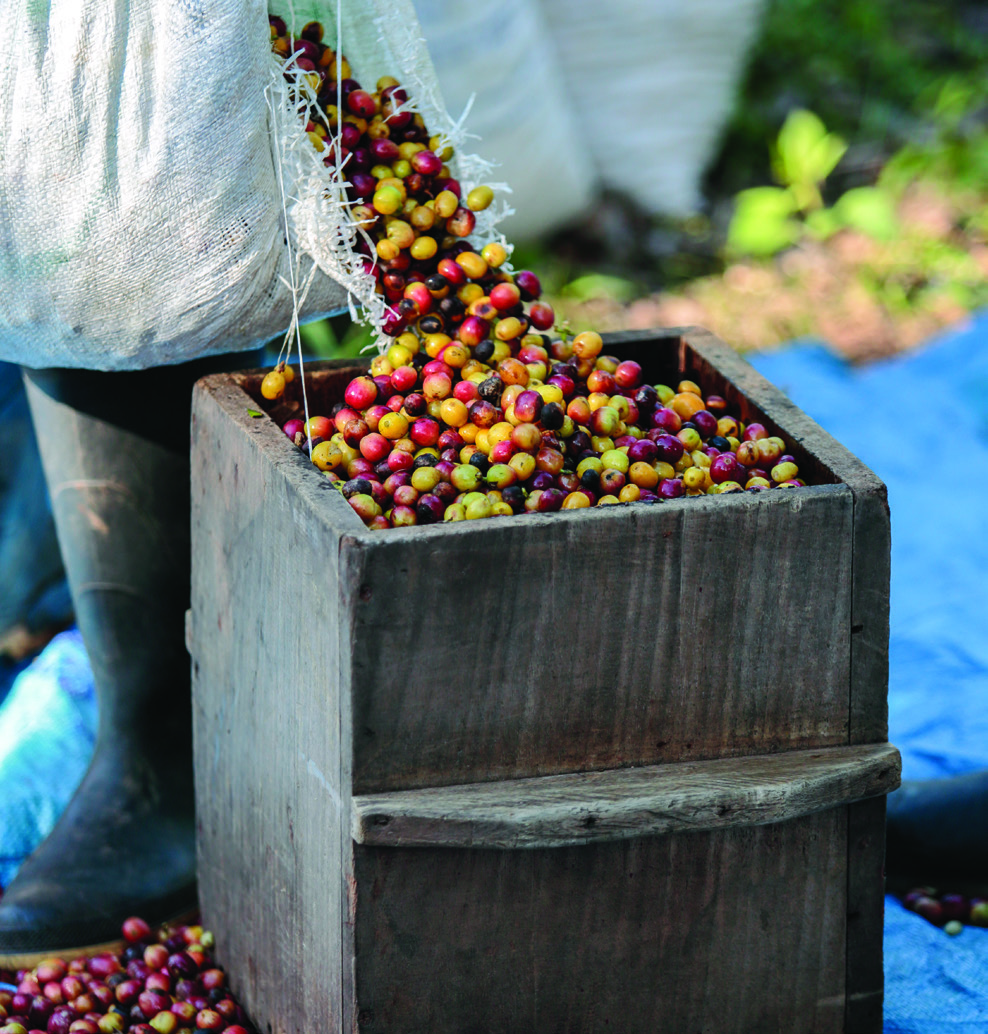 "Coffee cherry collected at La Revancha in Matagalpa, Nicaragua, is measured in wooden boxes to calculate how much workers are paid. Some of the hand-picked cherry falls during this process, which workers say makes them feel ""robbed."""