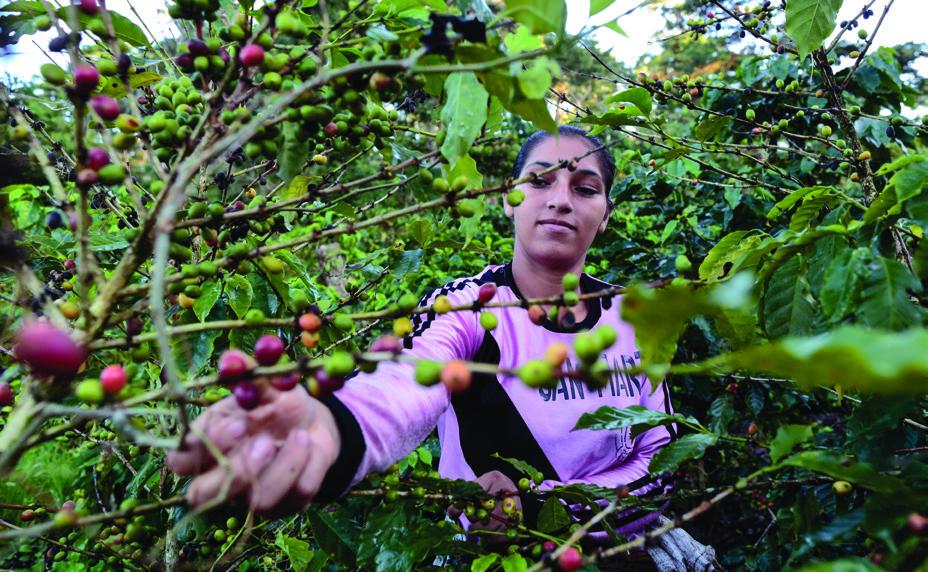 Xiomara Rivera, 20, also works as a co ee picker at La Revancha.