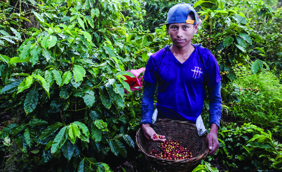 "Carlos Leiva, 22, is a co ee picker at Finca La Revancha in Matagalpa, Nicaragua. ""Here I earn 20 córdobas (about 75 cents) more per basket than I would at other co ee estates,"" he says."