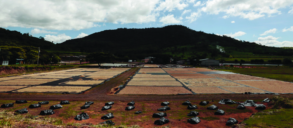Panoramic view of the coffee drying patios at La Providencia coffee processing facility.
