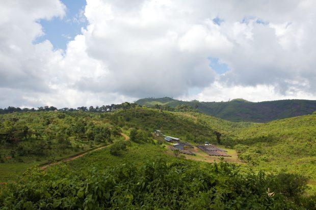 Gesha Village Coffee Estate Ethiopia