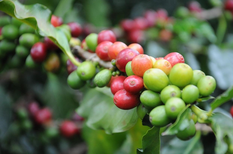 coffee-747604_1280