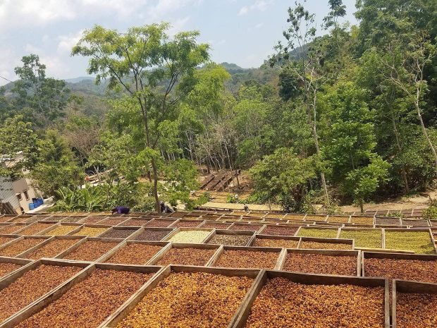 Top Coffee at Cup of Excellence El Salvador Auction Fetches $95 Per Pound