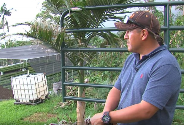 The Battle Continues for Longtime Kona Coffee Farmer Facing Deportation