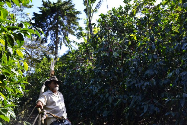 Nicaragua Cup of Excellence Auction Yields Record Average High