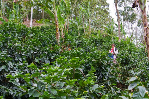 Global Coffee Platform Broadly Outlines Farmer Income Potential in 11 Producing Countries