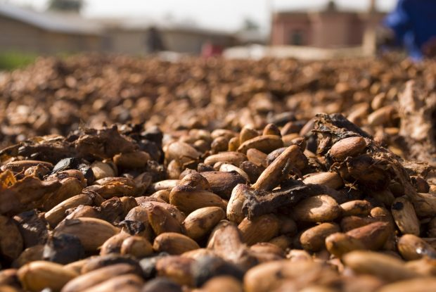 How Fine Cocoa is Following Specialty Coffee in Standards Development
