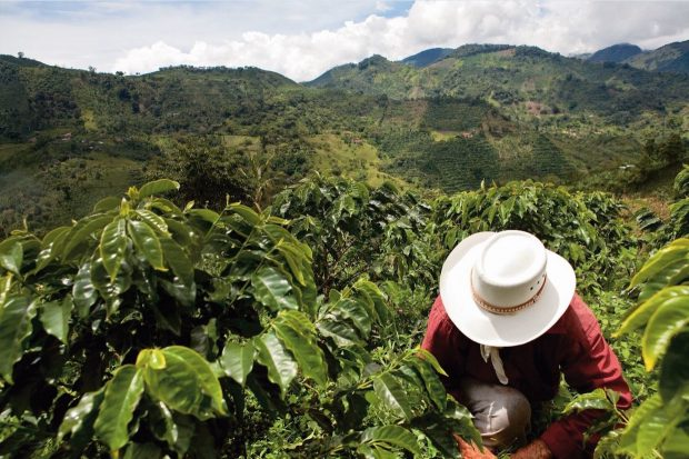 Nespresso Expands Sourcing Program in Colombian Post-Conflict Zones