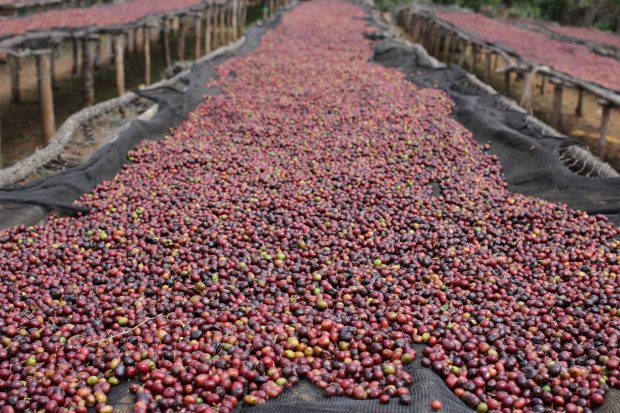 New Report: 'The Powerful Role of Intangibles in the Coffee Value Chain'