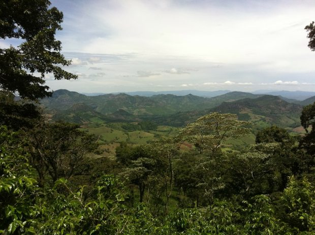 National Coffee Sustainability Platform Launches in Nicaragua