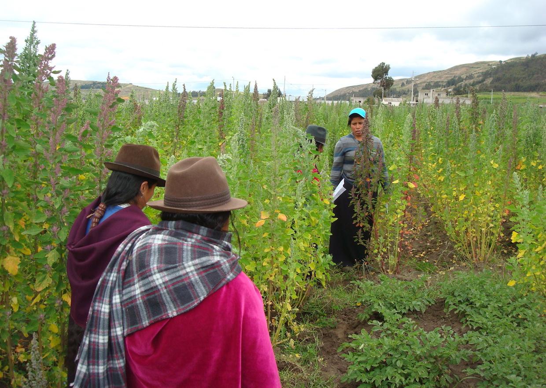 smallholder farmers quinoa