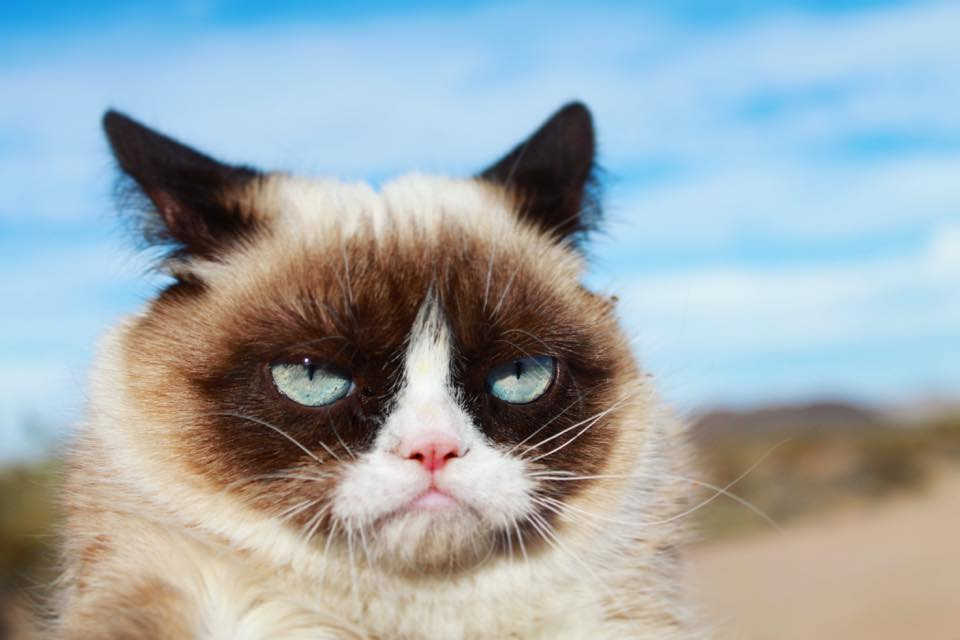 Grumpy Cat Awarded 710 000 In Coffee Brand Copyright Suit