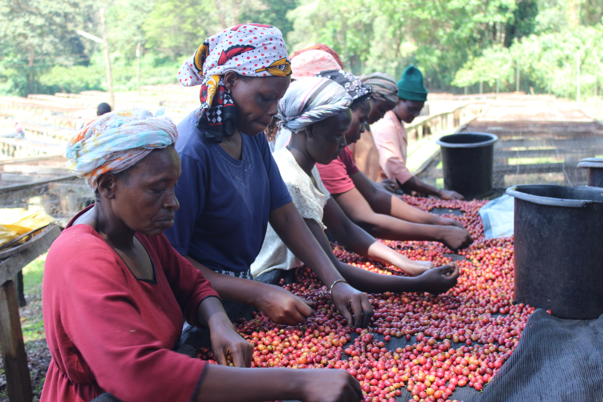 developing the philippine coffee industry Coffee production in the philippines began as early as 1740 when the spanish introduced coffee in the islands it was once a major industry in the philippines.