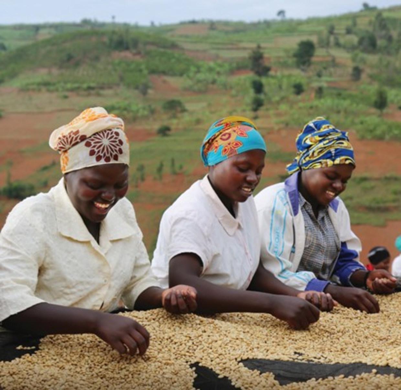 women in coffee drc rwanda