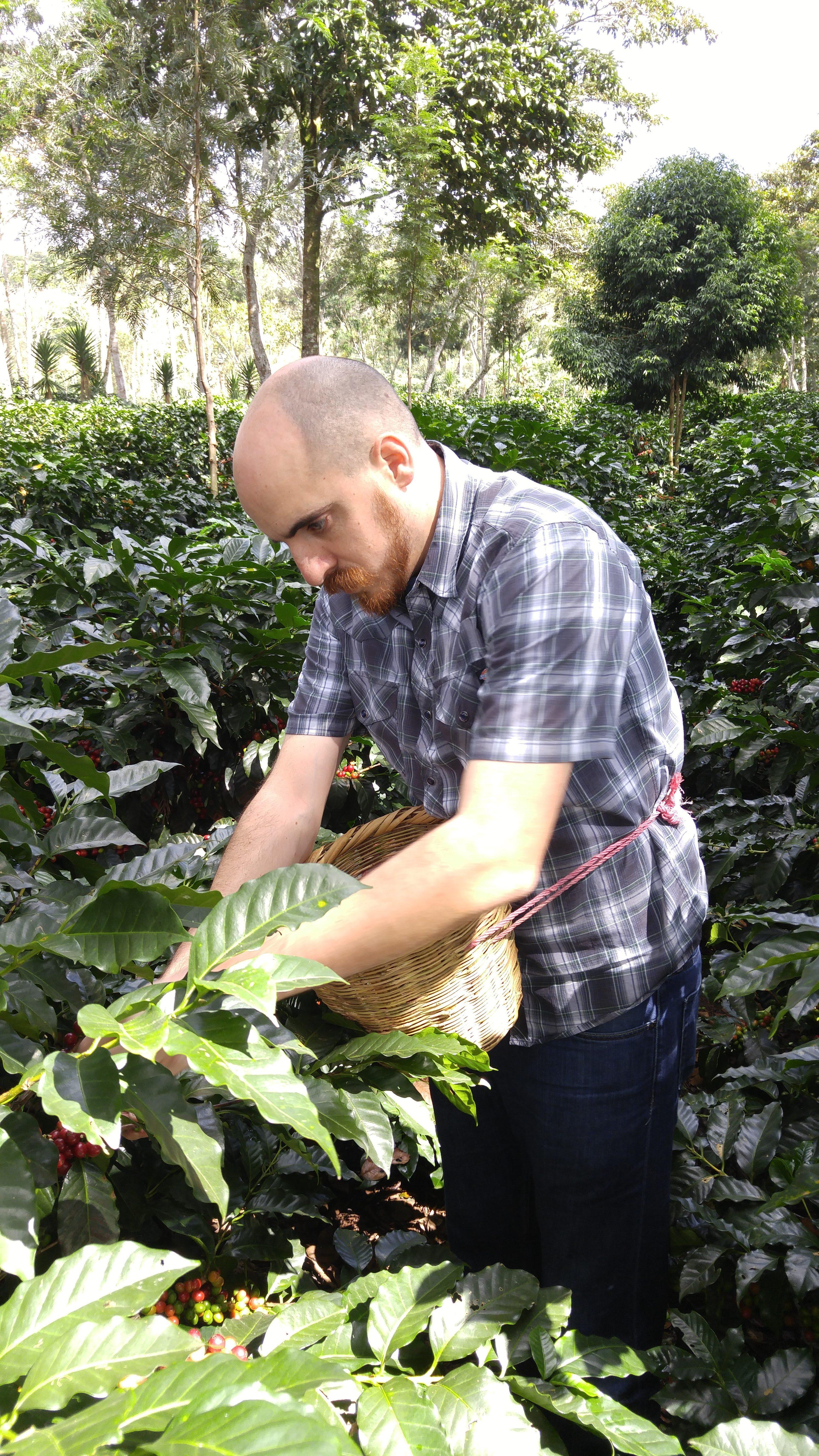 nathanael may green coffee picking
