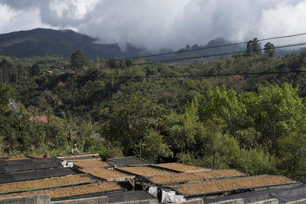 Origin Approach: Exploring Costa Rica's Fertile Specialty Coffee Landscape