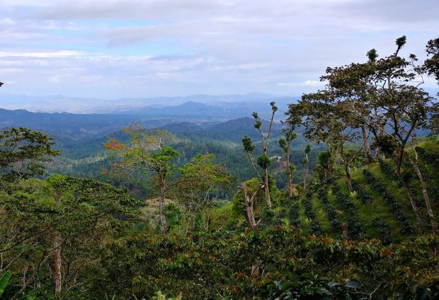 Weathering the Storm: A Coffee Crisis Threatens Farmers Throughout Nicaragua
