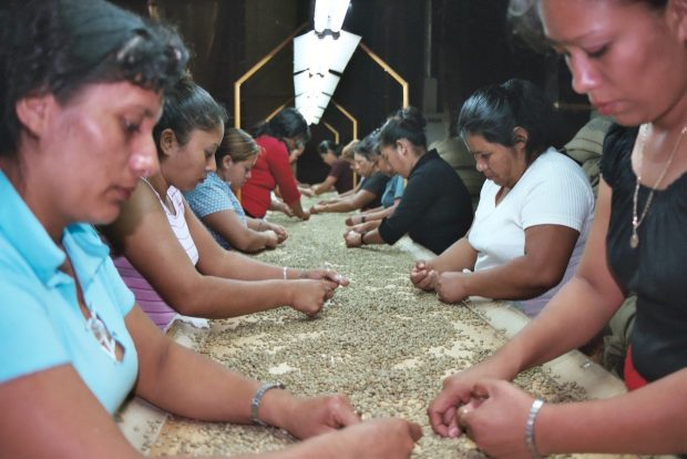 Despite Glimmers of Hope, Many El Salvador Coffee Farmers Struggle to Find Profit
