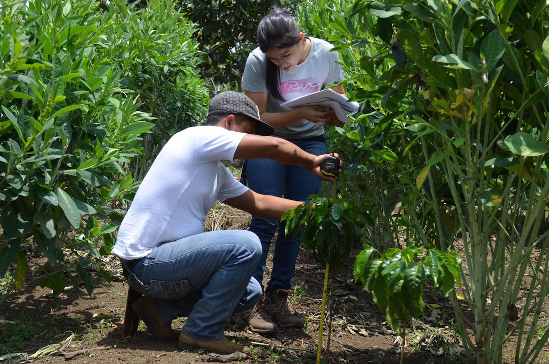 world coffee research monitoring program