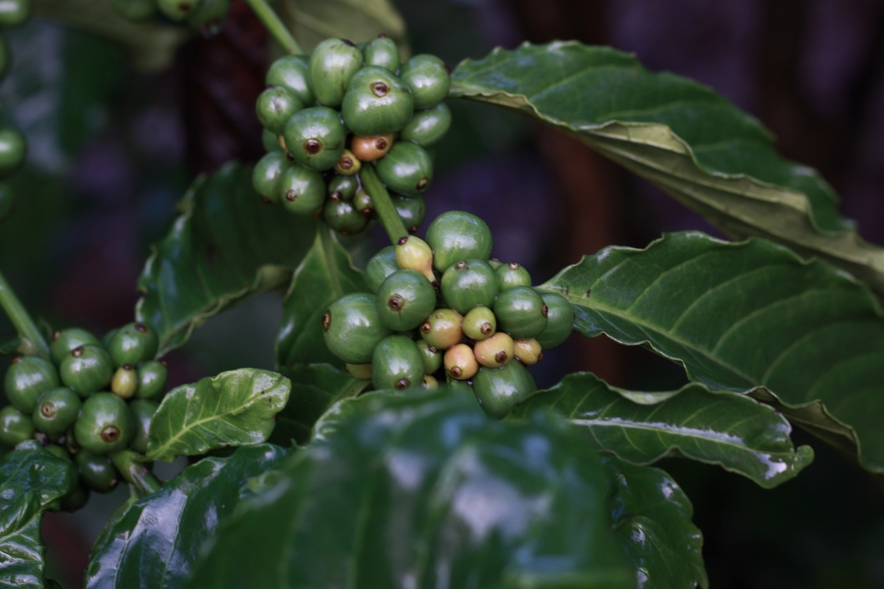 coffee VSS standards certifications