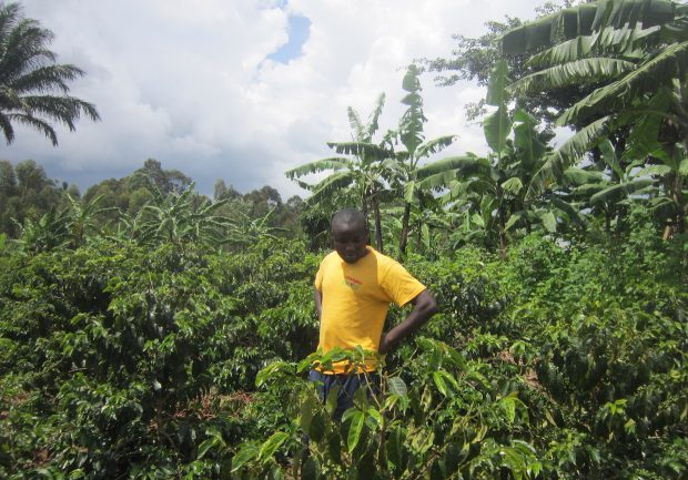Uganda's Plan to Become One of the World's Biggest Coffee Producers