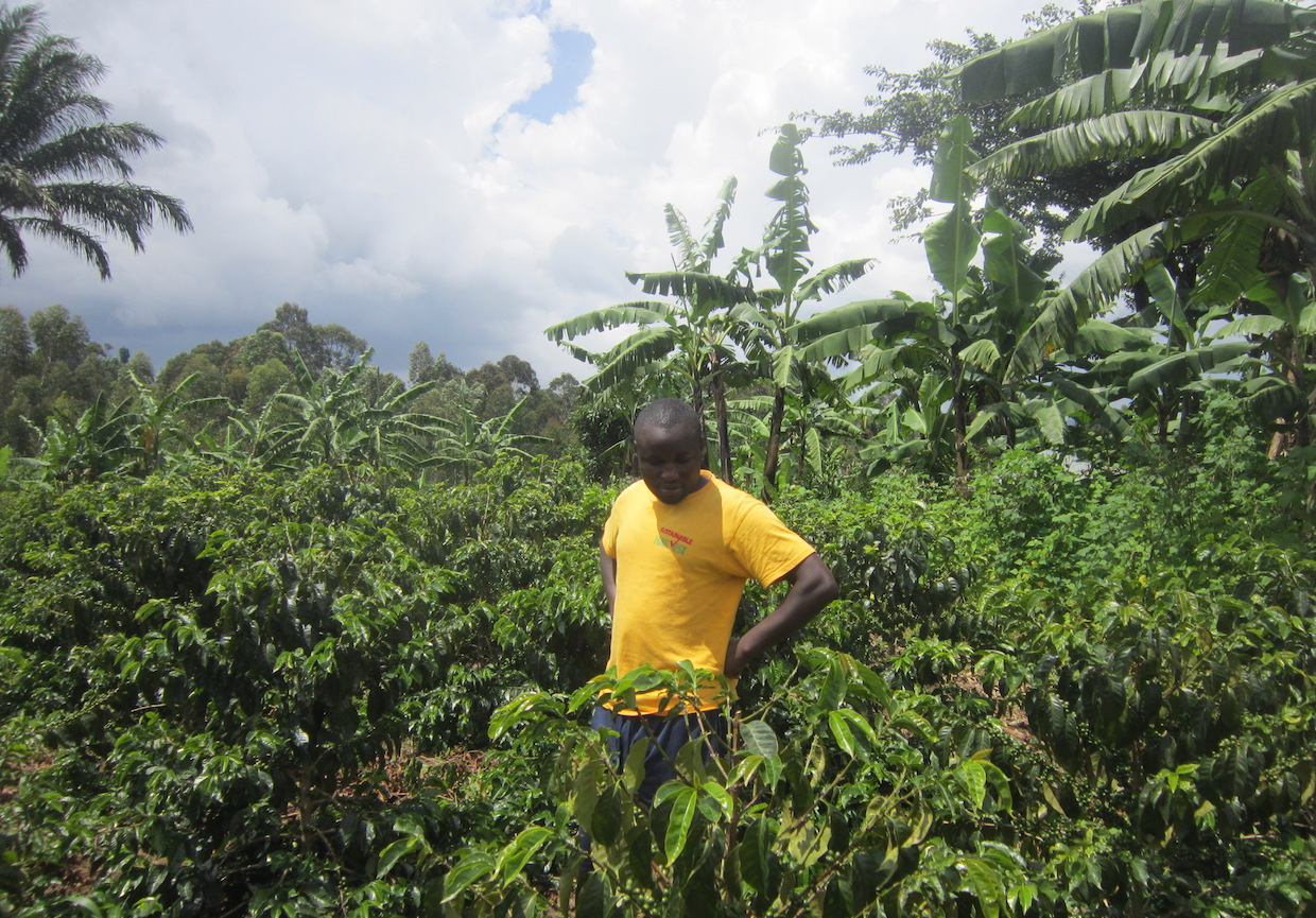 Uganda coffee sector production growth