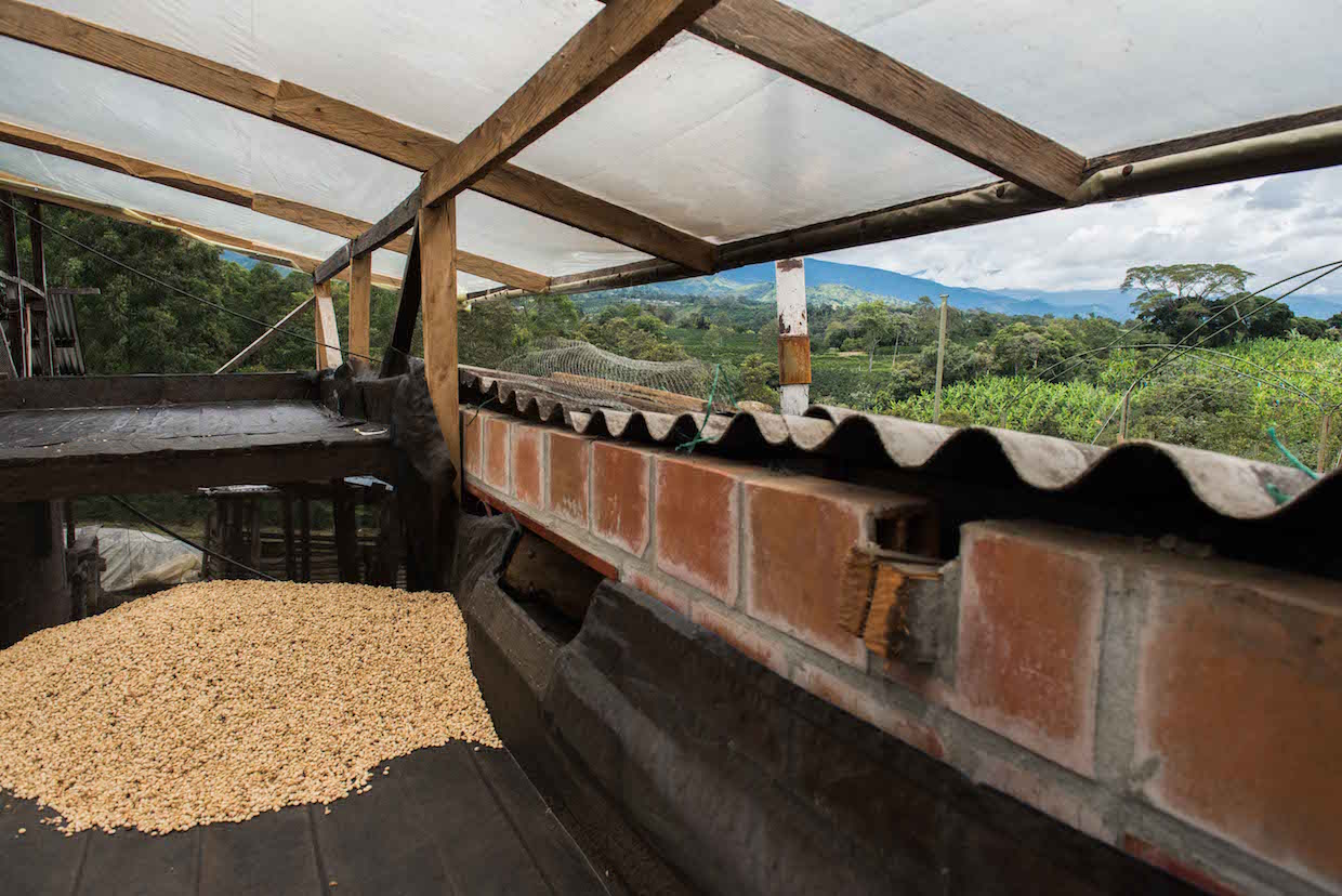 Let's Talk Coffee field trip Huila