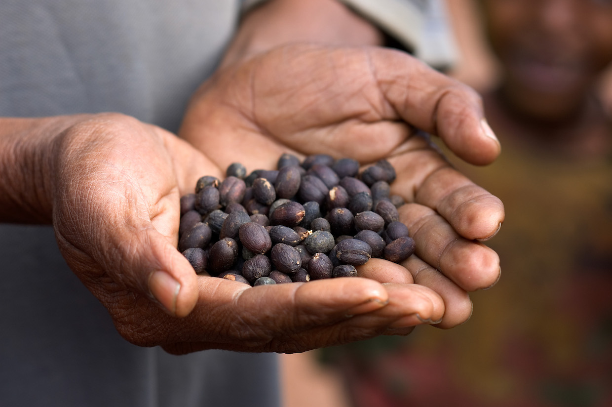 Coffee processing naturals