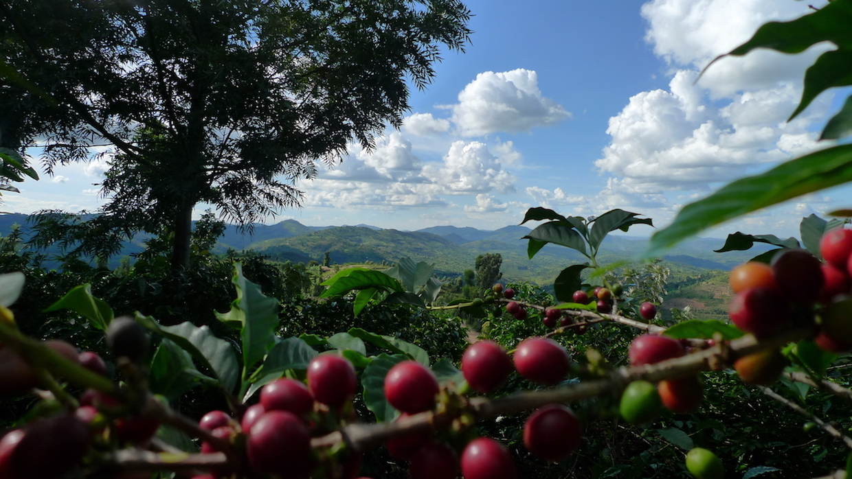 WCR-Caravela 4 – credit to Courtesy of World Coffee Research
