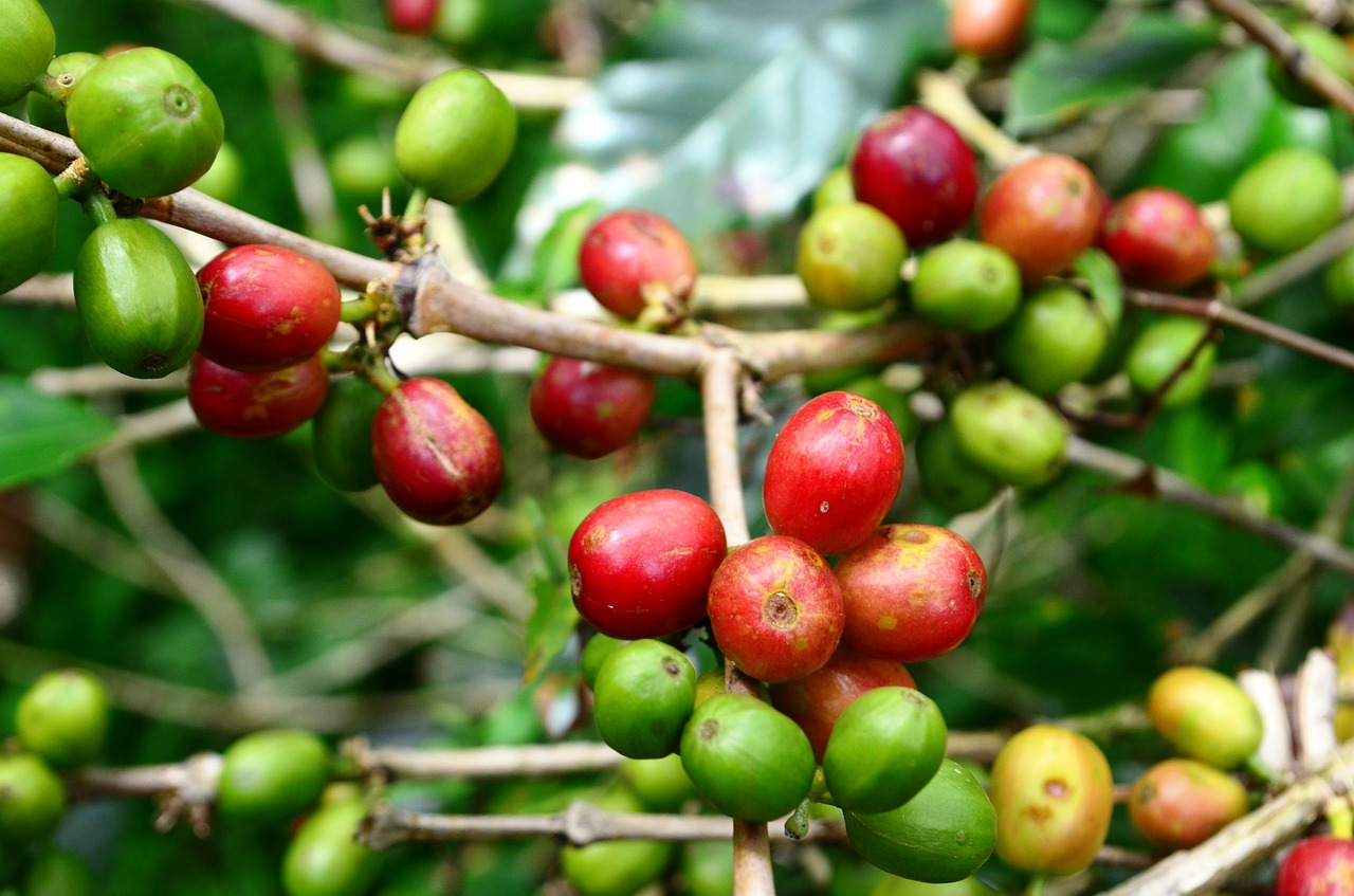 coffee sustainability certifications