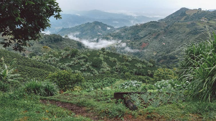 colombian coffee climate change