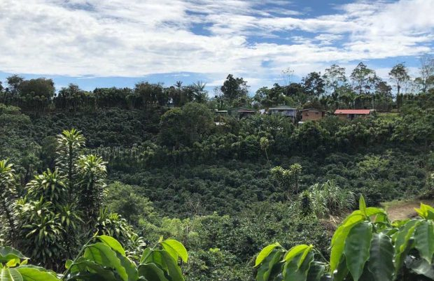 Costa Rica: A Classic Origin at a Crossroads