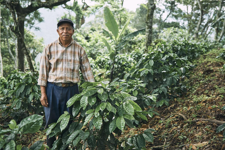 f1 hybrid coffee