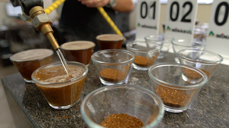 Minasul brazil coffee auction