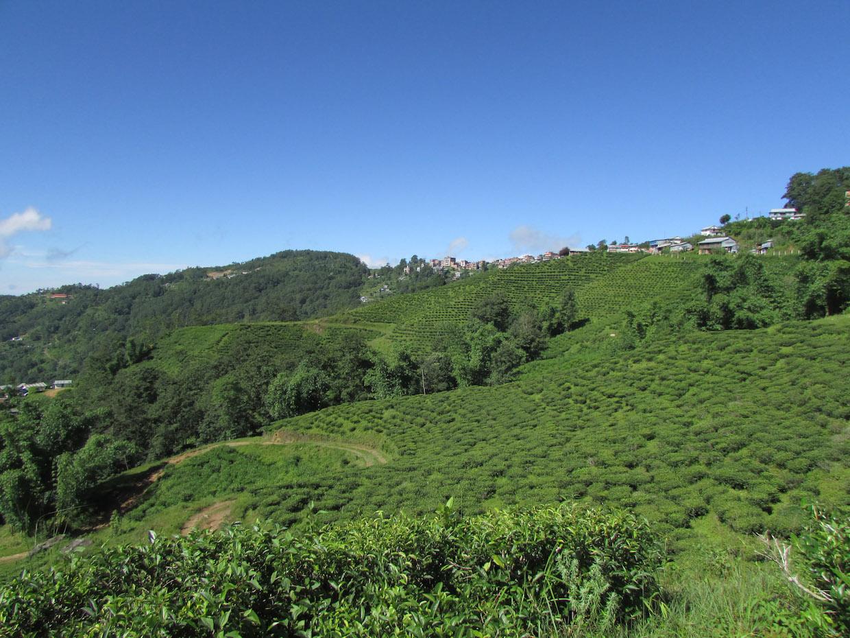 Nepal_coffee