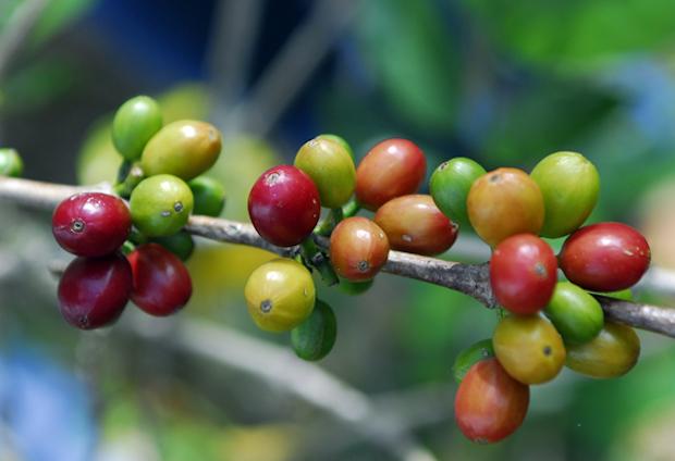 coffee biodiversity