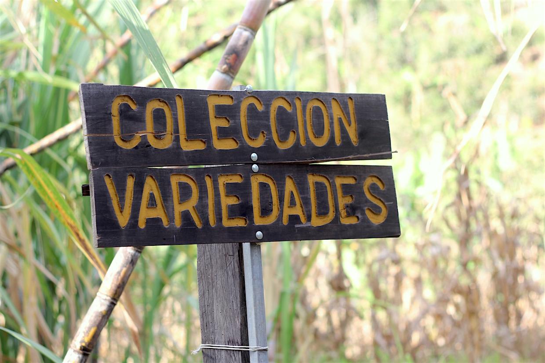 coffee_varieties