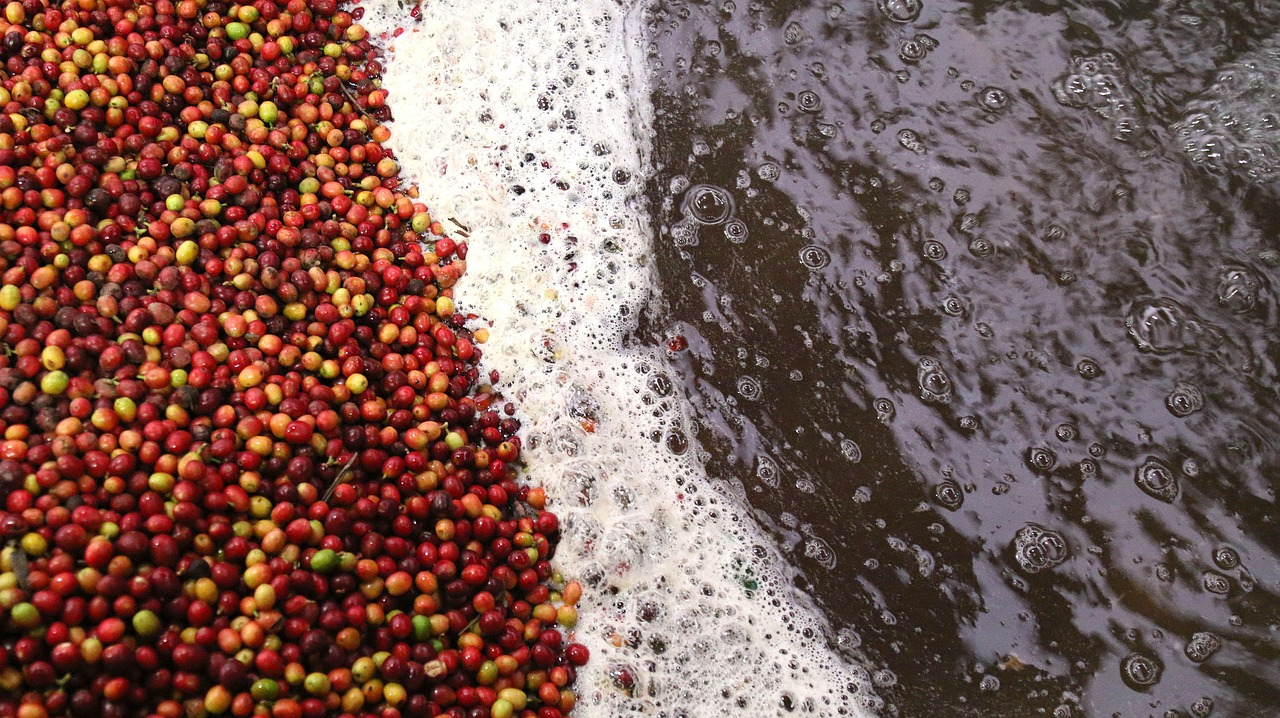 coffee processing wet mill wastewater
