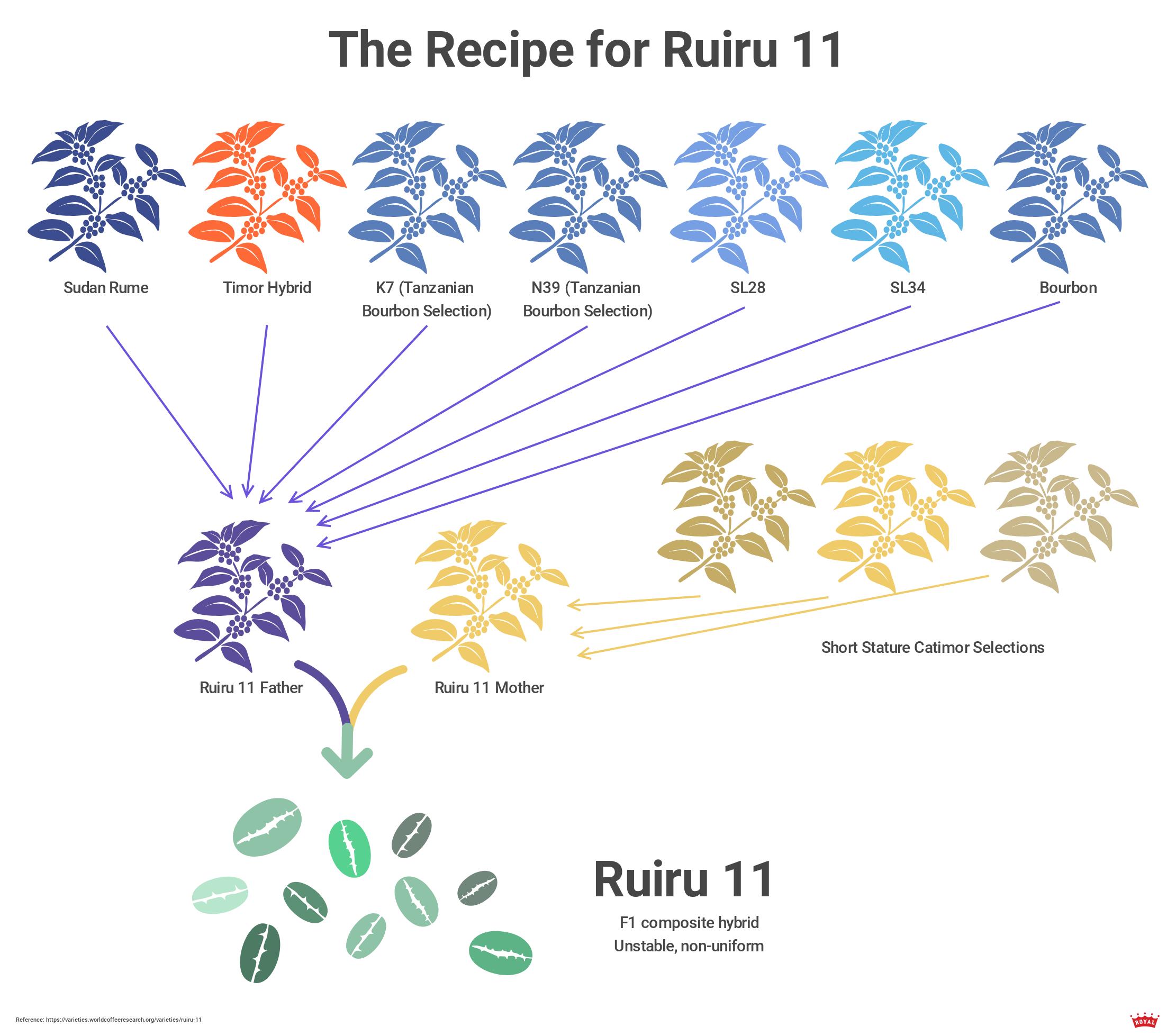 ruiru-11